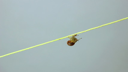 two snails creeping together along a string