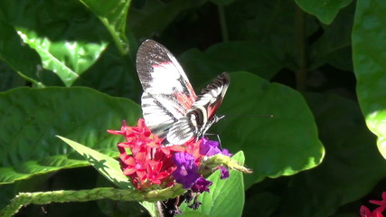 Exotic butterfly in a garden