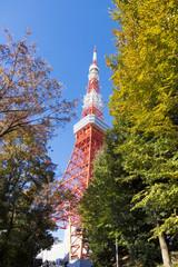 快晴青空 東京タワーと紅葉