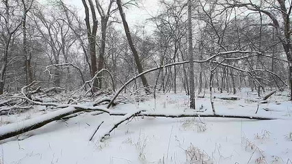 Winter Woodland Scene Illinois