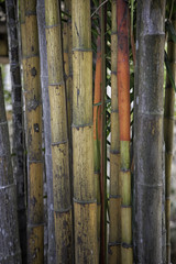 Bamboo close up, nice grunge texture