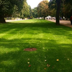 Zielony trawnik park