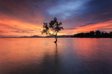 Silhouette of tree at the sea in sutset time
