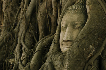 Tree of buddha and buddha head