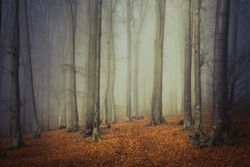 Autumn forest trees in a foggy day