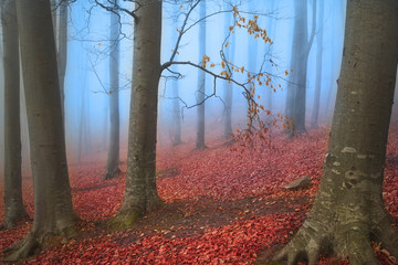 Romantic scene of a forest in the fog during fall