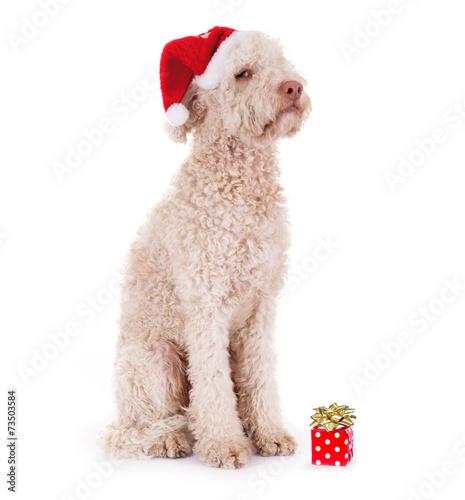 canvas print picture Unzufriedener Hund mit zu kleinem Geschenk