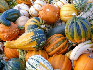 Variety of Colorful Pumpkins II