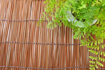 観葉植物と簾