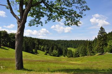 Schwalbenhauptwiese / Thüringer Wald