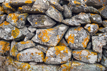 Dry stone wall with yellow lichens - background texture