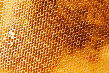 Bee honeycombs filled med close up as a background for design