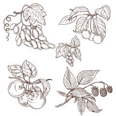 Fruit set sketch