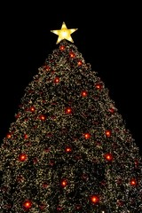 christmas tree with the star 5