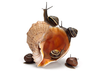 Five snails and sea cockleshell