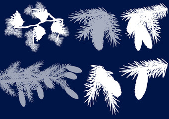 fir and pine branches  isolated on blue