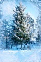 Winter background, landscape. Winter trees in wonderland. Winter