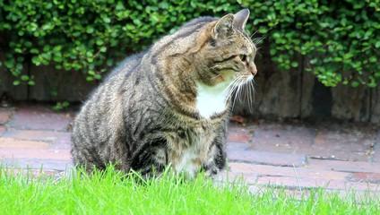 Katze getigert schaut um sich