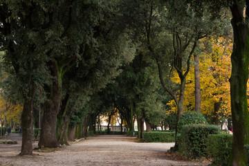Viale alberato nel parco di Viterbo