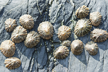Seashells on rocks