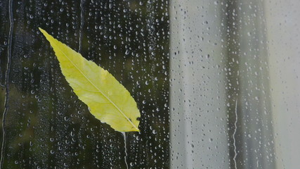 Autumn yellow leaf on a window glass in drops of rain