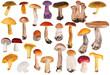 set of twenty six edible mushrooms isolated on white - 73517953