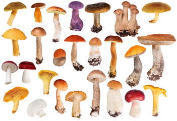 set of twenty six edible mushrooms isolated on white