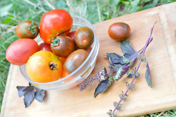 Group of different sorts tomatoes and branch of basil