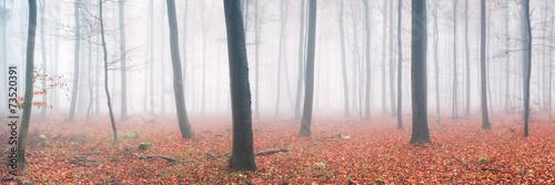 Herbstwald Panorama © eyetronic