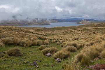 Pajonales de la laguna La Mica