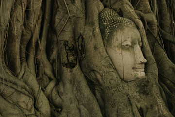 Tree of buddha and buddha head