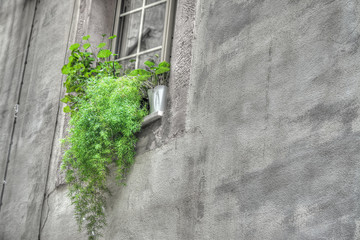 green plants in an old window sil