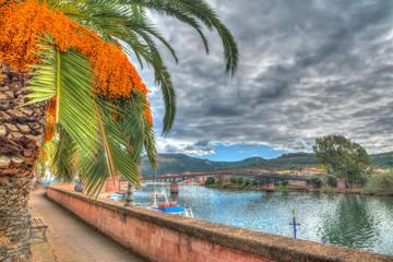 palm by Temo river, Sardinia