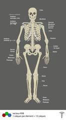 squelette + légende