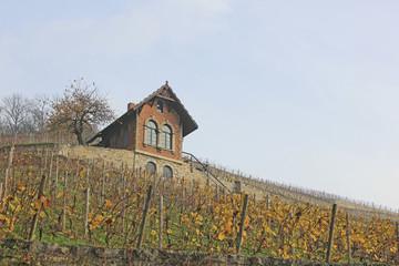 Freyburg: Weinhang im Herbst (Sachsen-Anhalt)