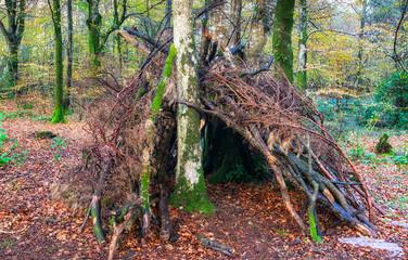 Woodland Survival Shelter
