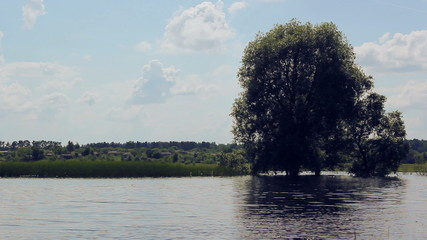 Tree covered with water.Flooding in the meadow in the village.