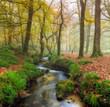 Obrazy na płótnie, fototapety, zdjęcia, fotoobrazy drukowane : Misty Forest