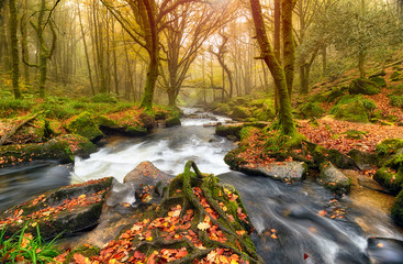 Autum Forest River