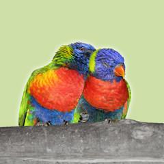 Two birds in love