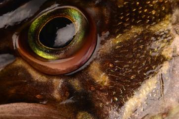 Fish pike closeup