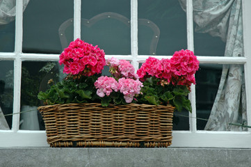 Red and pink geraniums on a window ledge.