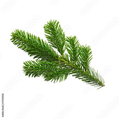 Leinwanddruck Bild fir branch