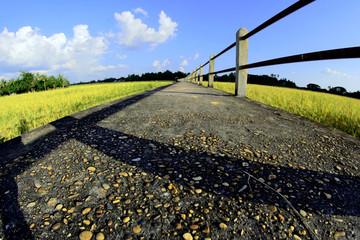 bridge Road To Farm Thailand