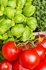 Tomaten und Basilikum, Tomatoes and basil