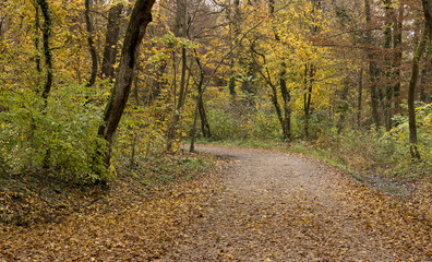 Road through forest covered with leaves