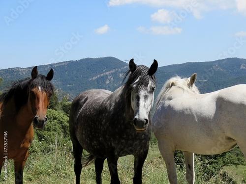 Foto op Plexiglas Paardrijden chevaux