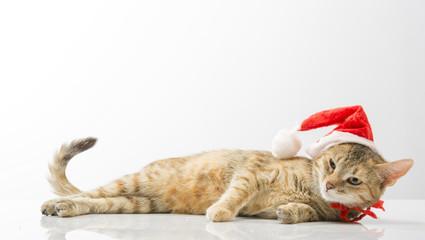 Cat in  bell of Santa Claus