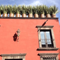 planted agave in pots on the roof of building