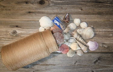 Seashells on wood background